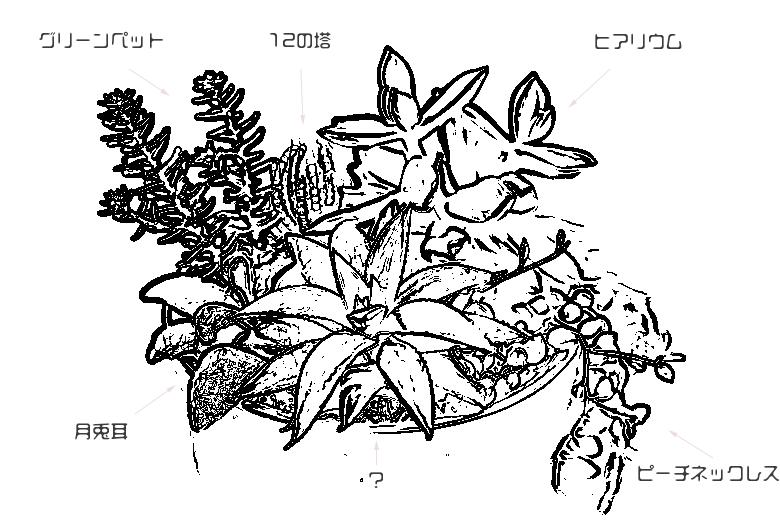 多肉植物(名前)
